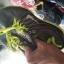สั่งคัด รองเท้าผ้าใบ มือสอง สภาพคัด งานป้าย ตลาดโรงเกลือ thumbnail 63
