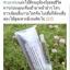 X'BEINO เอ็กบิไอโน่ เซรั่มเมโส เกาหลีหน้าใส ชนิดทา thumbnail 11