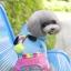 ชุดน้องหมาสี่ขาhoodหมีสีฟ้า Size M thumbnail 1