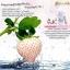 Gimmick Collagen กิมมิค คอลลาเจน อาหารเสริมรูปแบบใหม่ โยเกิร์ต และสมูทตี้ เพื่อผิวขาว ใส thumbnail 8