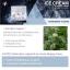 Ice sleeping cream By Novena (Night Cream) ครีมน้ำแข็ง ไอซ์ สลีฟปิ้ง ครีม (ครีมบำรุงกลางคืน) thumbnail 4