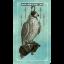 Ostara Tarot (Box Set) thumbnail 46